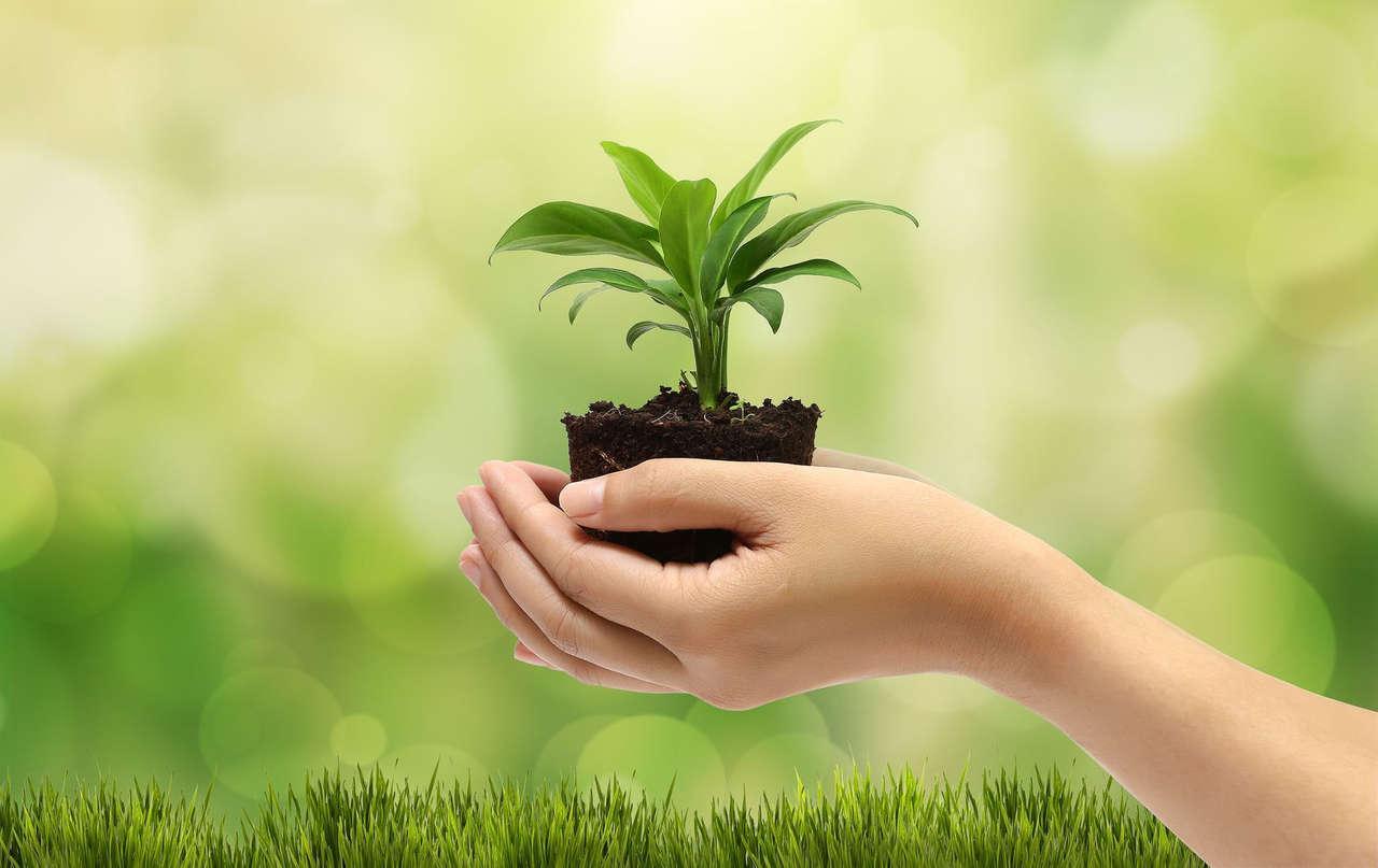 Certificación ISO 14001 – Sistema de Gestión Medio Ambiental